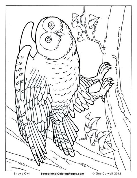 the coloring book for cool who animals books realistic coloring pages of animals coloring home