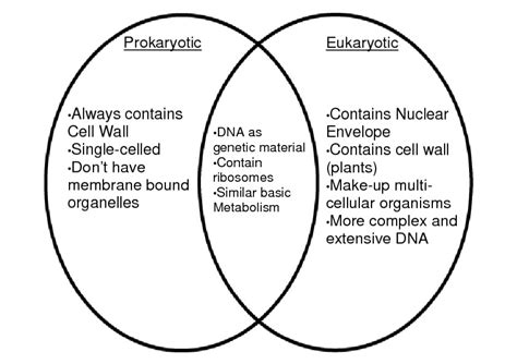 prokaryote and eukaryote venn diagram free coloring pages of prokaryotic cell diagram