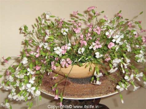 types of flower arrangement flower arrangement introduction to flower arrangements hobbies