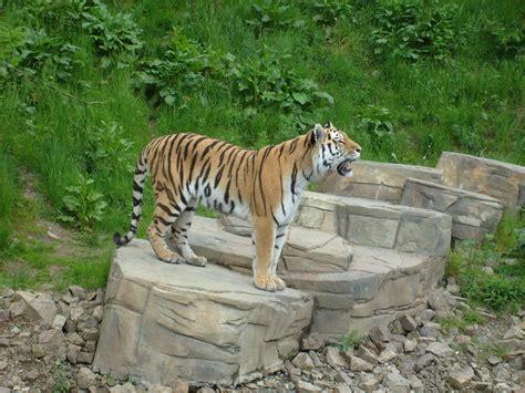 Zoologischer Garten Wuppertal öffnungszeiten by Visiting Animals In Wuppertal Zoo In Wuppertal Germany