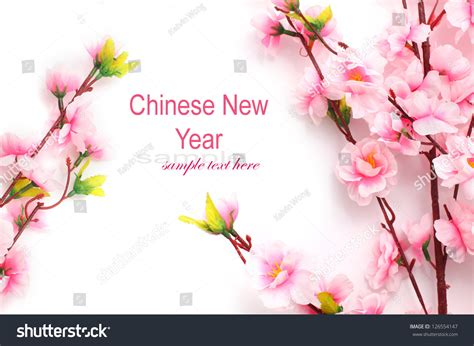 new year flower background plum flowers blossom on white background stock photo