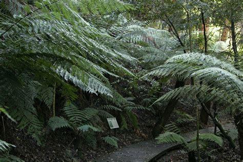 file national botanical gardens rainforest tour jpg wikimedia commons