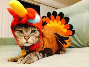 these 24 cats love thanksgiving or at least the food
