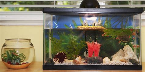 home aquarium mycobacterium marinum infections from aquariums may be