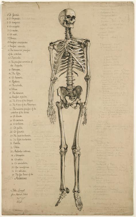 Drawing Human Anatomy by Yeah Diagrams