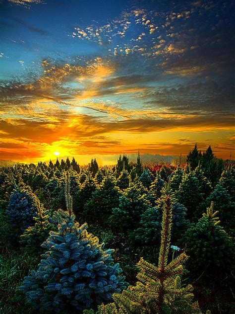 fun christmas tree places in se wisconsin tree farm wisconsin gt gt gt oh travel finds beautiful places
