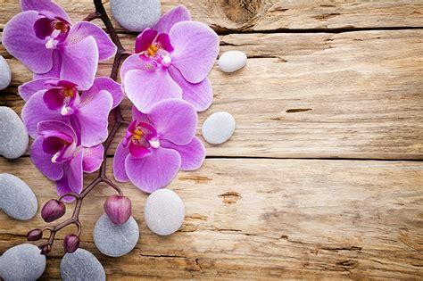 Bilder Mit Steinen Und Blumen by Fotos Orchideen Blumen Steine