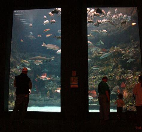 best fan for aquarium 27 best fan photos images on pinterest fisher castles