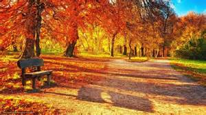 Bench Site Wallpapers A Bench Bench Trees Footpath Park 590555