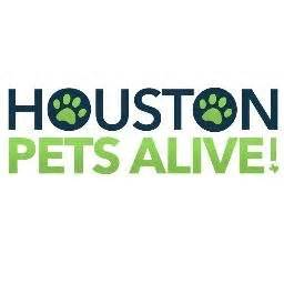 houston dogs houston pets alive houpetsalive