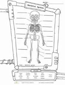 skeleton diagram worksheet education com