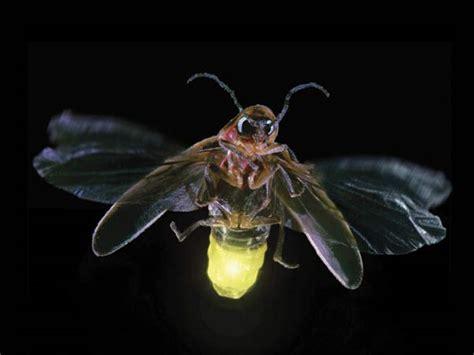 alla scoperta delle lucciole con la forestale il