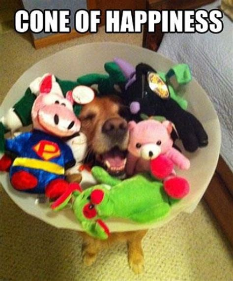Cone Of Shame Meme - funny dog meme
