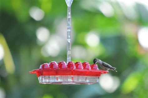 best hummingbird feeder ever 24 feeding ports simple