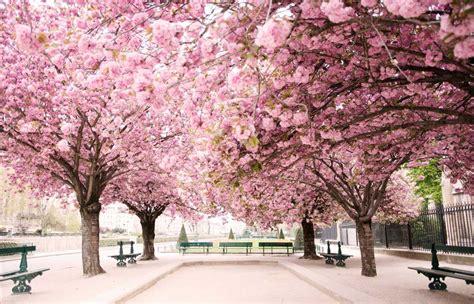 paris in bloom paris in bloom carla coulson