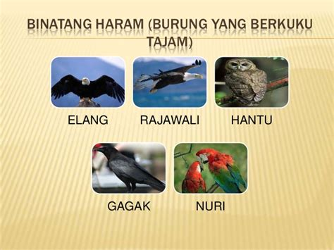 contoh hewan yang halal makanan dan minuman yang halal dan yang haram
