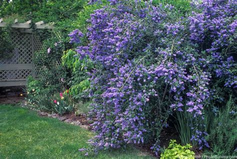 Garten Hohe Pflanzen by High Resolution Water Garden Plants 5 California Low