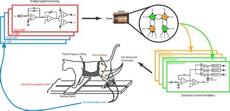 pattern generator chip analogue chip could be rx for spinal cord injury