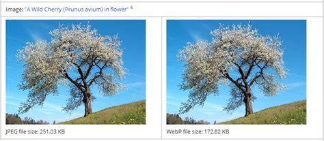format gambar jpg merupakan cara konversi format gambar webp ke png atau jpg desert