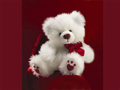what is a teddy most beautiful teddy wallpapers