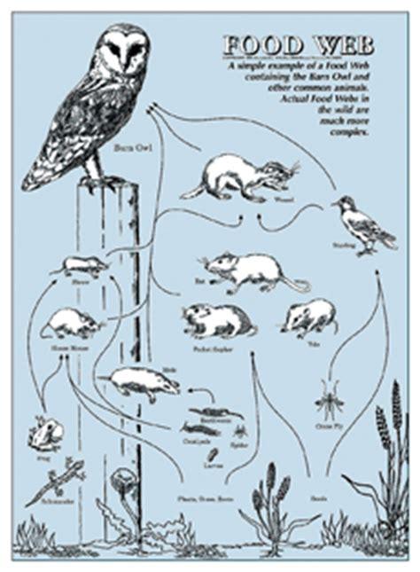 barn owl food web diagram owl food web poster