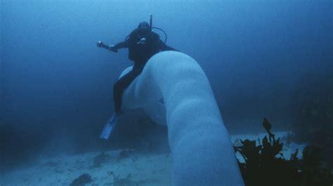 imagenes de unicornios marinos tunicado marino el unicornio imposible del oc 233 ano fotos