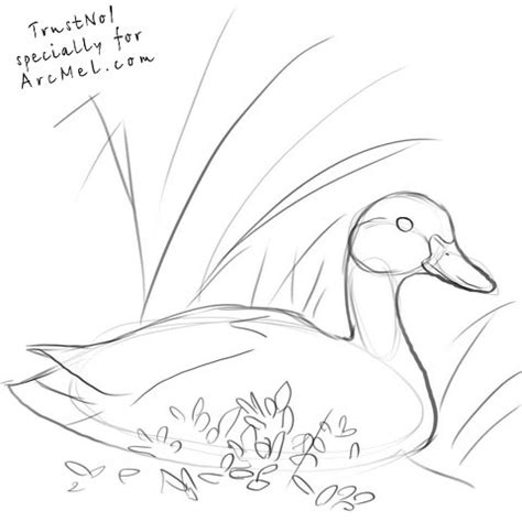 how to draw ducks duck beak drawing www pixshark images galleries with a bite