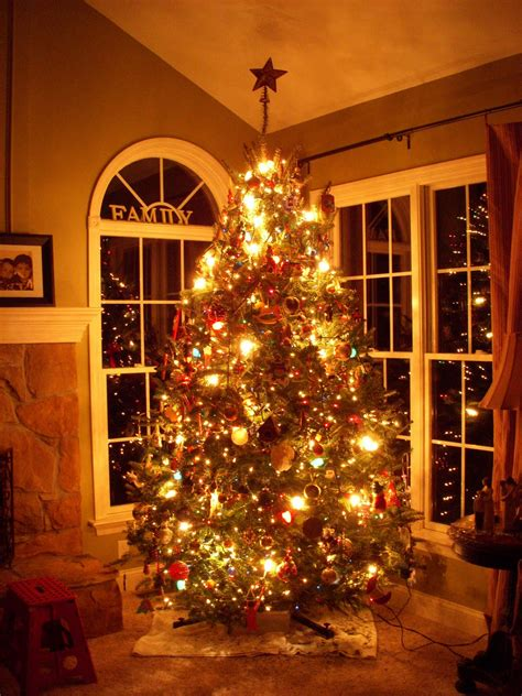 indoor christmas tree photo album home design ideas images