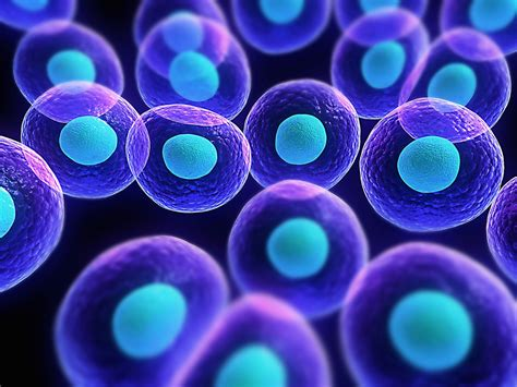 stem cells report stem cell research science and policy nhsjs