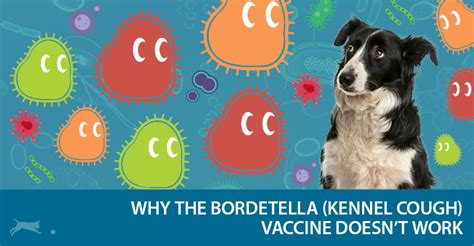 bordetella for dogs bordetella vaccination for dogs fraud and fallacy