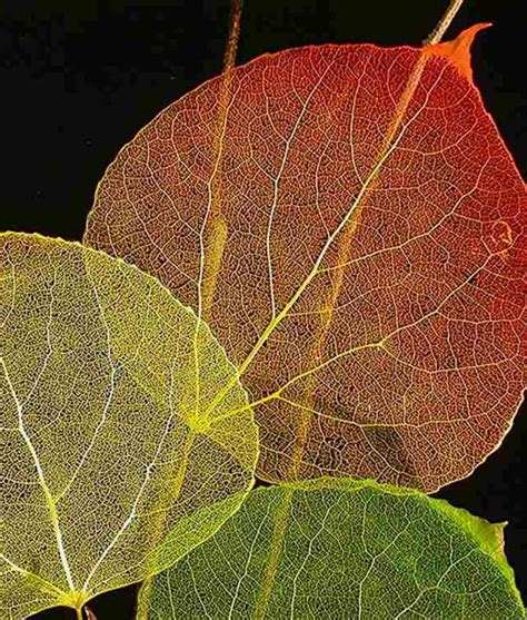 Cottage Decor Etched Leaf Art Archives Rustic Artistry