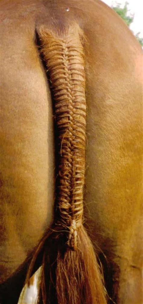 horseshoe hair sectioning 19 best images about horse upgrade on pinterest see more