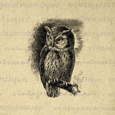 printable real owl pictures artworks clip art and graphics on pinterest