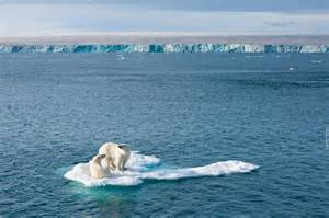 Polar Extinction Essay by Why Should We Care About Endangered Species