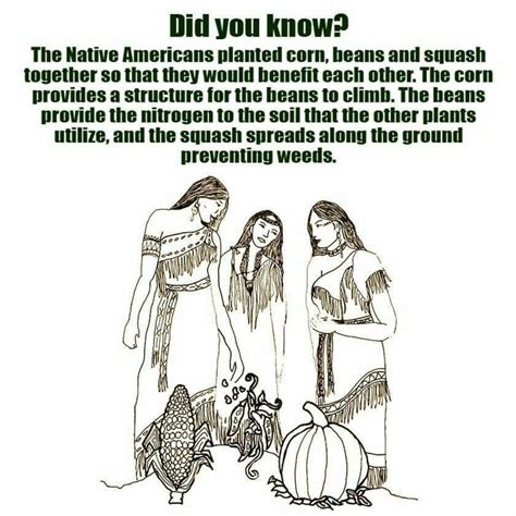 where did native americans go to the bathroom 28 images