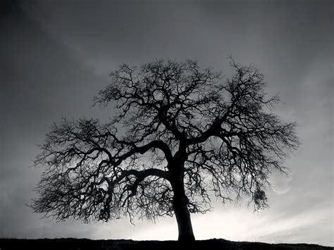 black and white tree images black and white tree hill wallpaper the goodbye