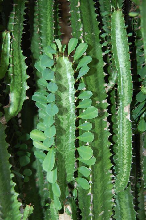 fotobanka pichlavy kvet botanika rostliny