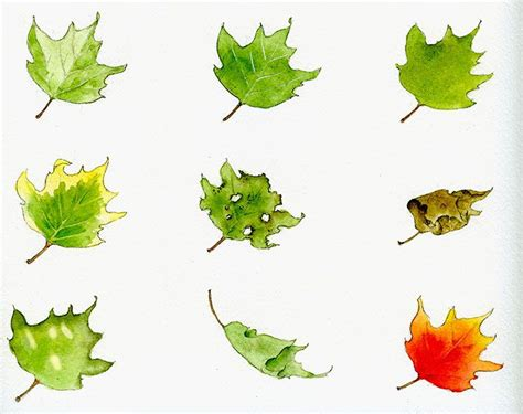 watercolor leaves tutorial 17 best images about maltechniken on pinterest horse