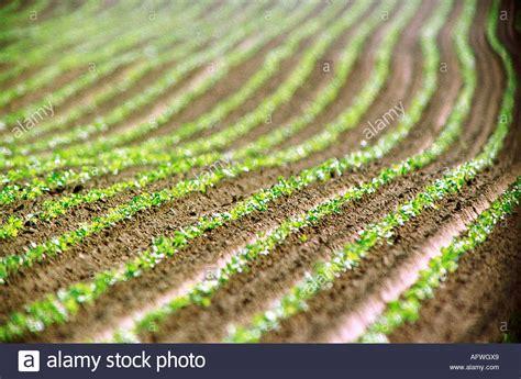 erdbeersetzlinge pflanzen f 252 r nassen boden
