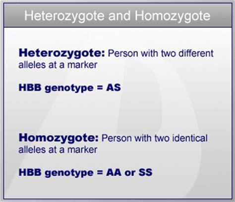 exle of heterozygous heterozygous vs homozygous www pixshark images