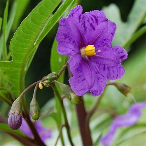 fiori da balcone resistenti al sole piante da balcone resistenti al sole foto www donnaclick