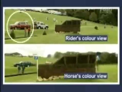 do horses see color what does your really see