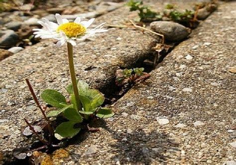 il cemento non è un fiore testo ddl consumo suolo dai comuni critiche su iter