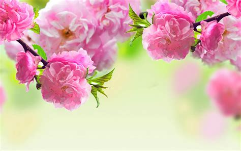 spring flower spring season 2014 wallpapers hd free download unique