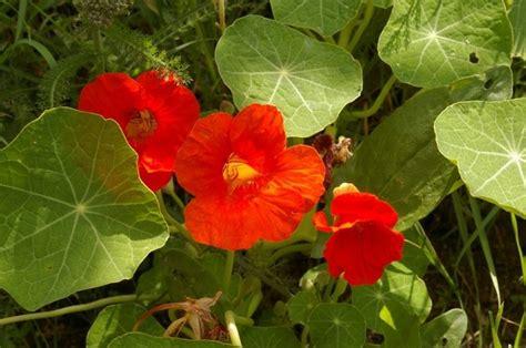 pianta da giardino pianta da esterno piante da giardino pianta da esterno