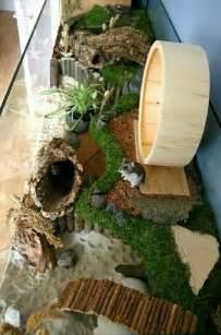 am 233 nager la de hamster le grand hamster d alsace