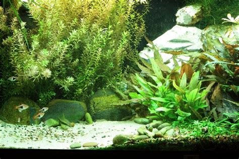 biotope aquascape 17 best images about aquascaping ideas on pinterest