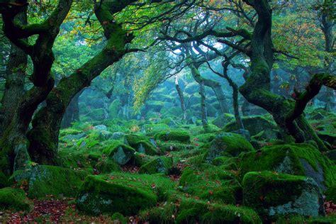 imagenes de paisajes que tengan movimiento forest tree moss wallpaper 1920x1280 202048 wallpaperup