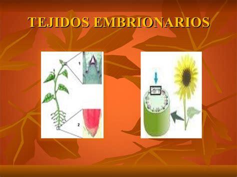 tejidos animales y vegetales tejidos vegetales