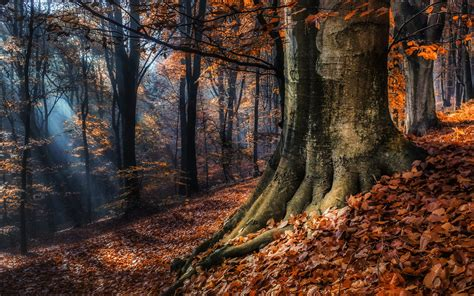 imagenes 4k naturaleza fondos 4k de bosques en oto 241 o lanaturaleza es